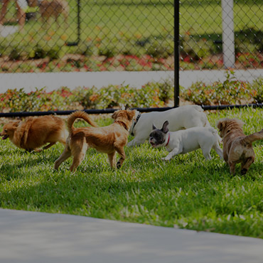 Large Dog Park at Sugar Pine Townhomes Apartments